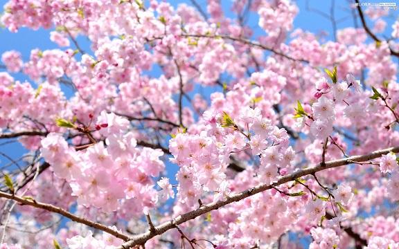 お花見散歩ツアー